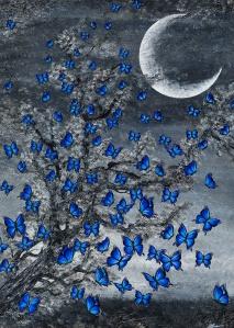 schmetterlinge morphofalter blau mond